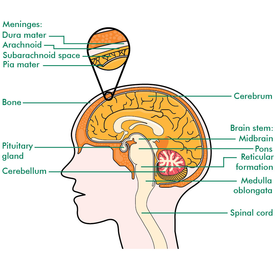 The Central Nervous System Irish Brain Tumour Support
